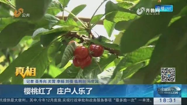 【真相】临朐:樱桃红了 庄户人乐了