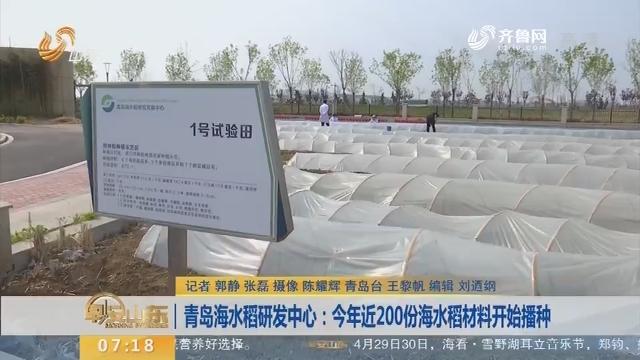【闪电新闻排行榜】青岛海水稻研发中心:2018年近200份海水稻材料开始播种
