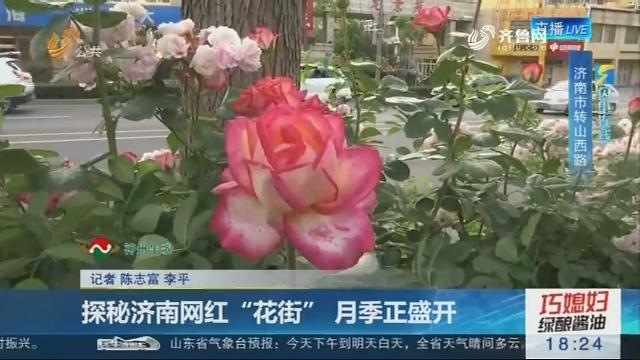 """【闪电连线】探秘济南网红""""花街"""" 月季正盛开"""