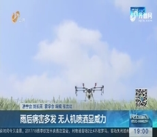 济宁:雨后病害多发 无人机喷洒显威力