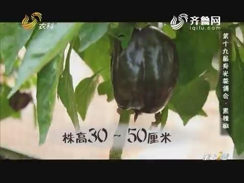 第十九届寿光菜博会·黑辣椒