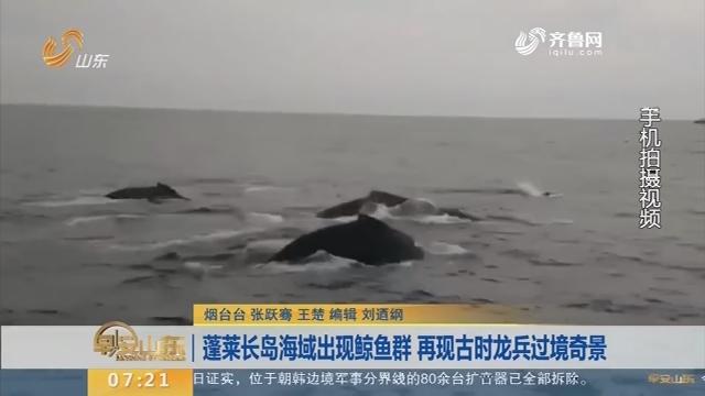 蓬莱长岛海域出现鲸鱼群 再现古时龙兵过境奇景