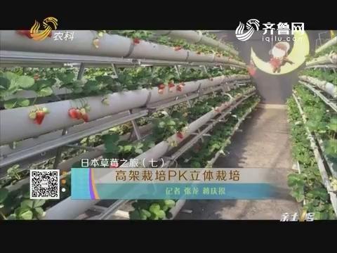 【日本草莓之旅(七)】高架栽培PK立体栽培