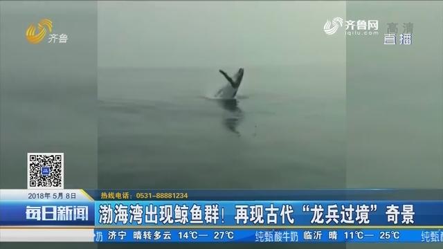 """渤海湾出现鲸鱼群!再现古代""""龙兵过境""""奇景"""