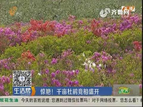 威海:惊艳!千亩杜鹃竞相盛开