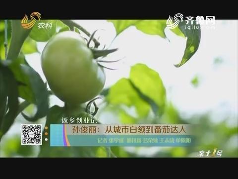 【返乡创业记】孙俊丽:从城市白领到番茄达人