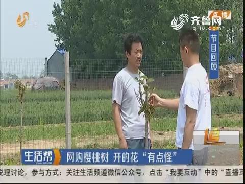 """潍坊:网购樱桃树 开的花""""有点怪"""""""