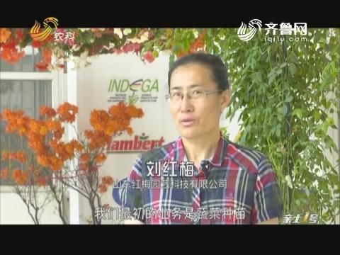 【第十九届寿光菜博会特别节目】飞到中国的比利时熊峰