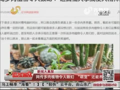 """【新闻大真探】网传多肉植物令人致幻 """"萌宠""""还能养吗?"""