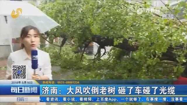 济南:大风吹倒老树 砸了车碰了光缆