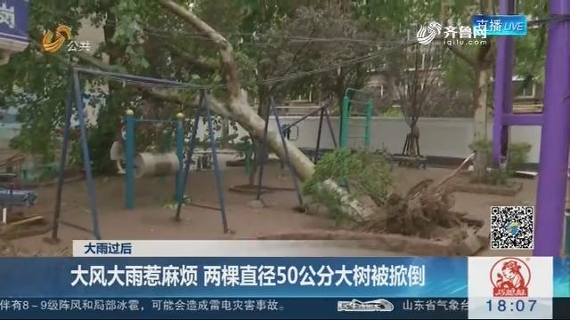 【大雨过后】济南:大风大雨惹麻烦 两棵直径50公分大树被掀倒