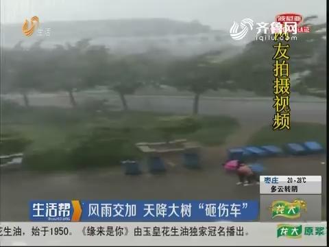 """临沂:风雨交加 天降大树""""砸伤车"""""""