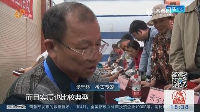 济南:红山文化时期石器和商代晚期的戈出现在鉴宝现场
