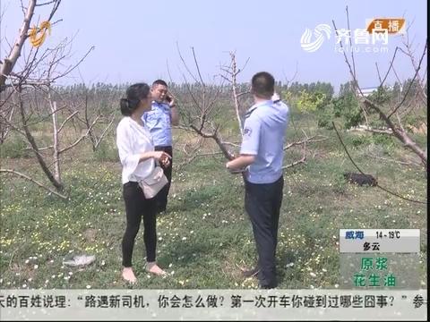 潍坊:损失惨重 一千多棵桃树死亡