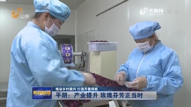 【推动乡村振兴 打造齐鲁样板】平阴:产业提升 玫瑰芬芳正当时