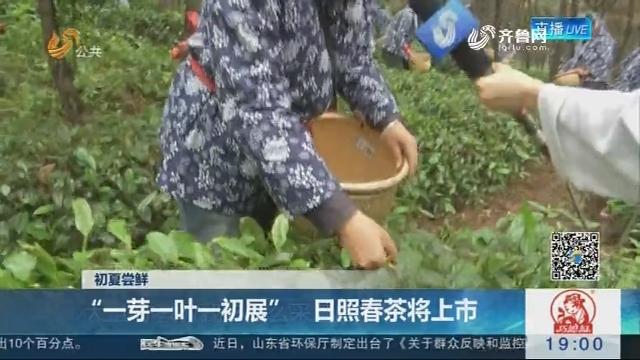 """【初夏尝鲜】""""一芽一叶一初展"""" 日照春茶将上市"""
