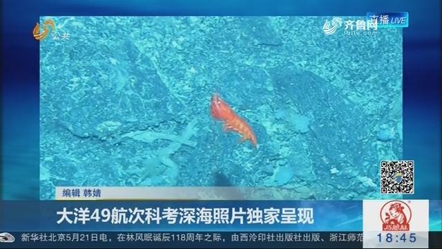 大洋49航次科考深海照片独家呈现