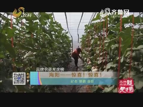 品牌农资龙虎榜:海阳——惊喜!惊喜!