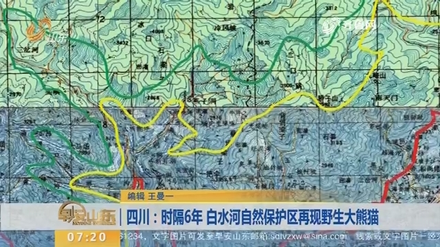 四川:时隔6年 白水河自然保护区再现野生大熊猫