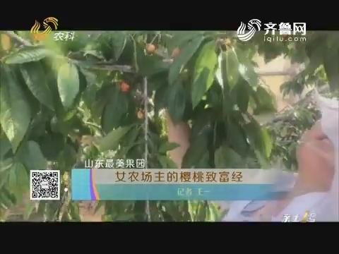 【山东最美果园】女农场主的樱桃致富经