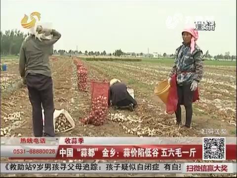 """【收蒜季】中国""""蒜都""""金乡:蒜价陷低谷 五六毛一斤"""