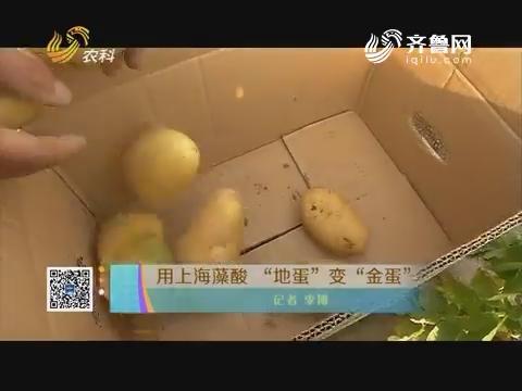 """用上海藻酸 """"地蛋""""变""""金蛋"""""""
