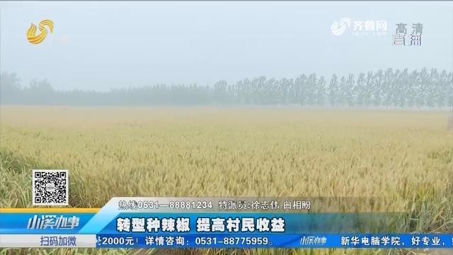 菏泽:转型种辣椒 提高村民收益