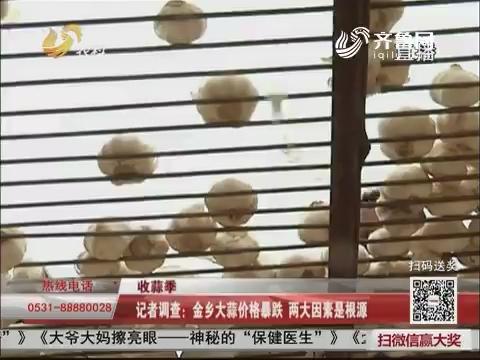 【收蒜季】记者调查:金乡大蒜价格暴跌 两大因素是根源