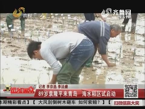 89岁袁隆平来青岛 海水稻区试启动