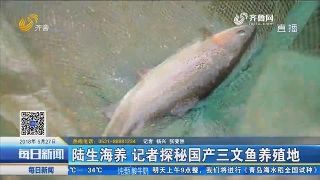 养殖的三文鱼能生吃吗?