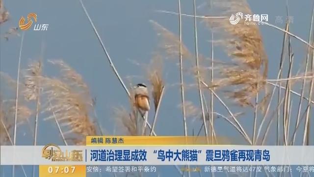 """【闪电新闻排行榜】河道治理显成效 """"鸟中大熊猫""""震旦鸦雀再现青岛"""