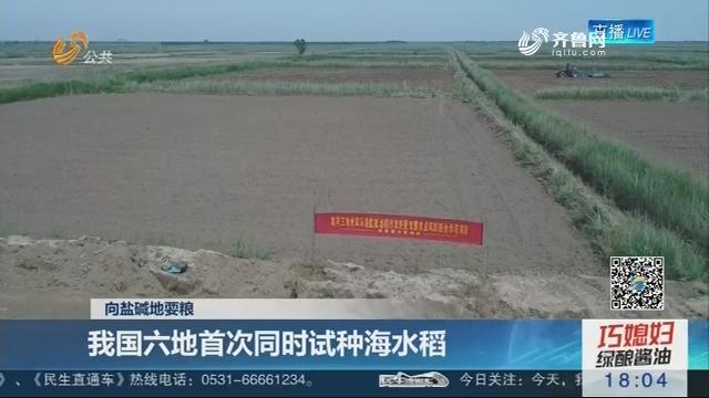 【向盐碱地要粮】我国六地首次同时试种海水稻