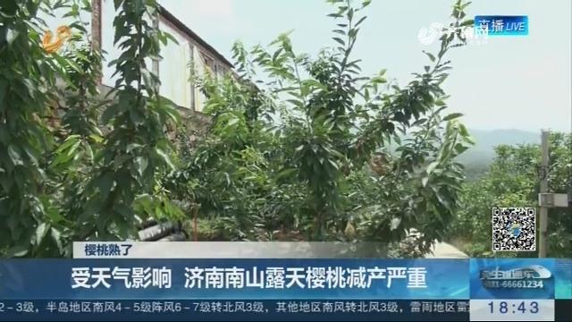 【樱桃熟了】受天气影响 济南南山露天樱桃减产严重