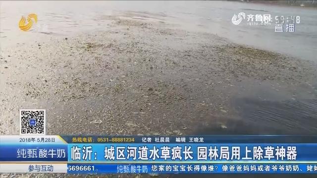 临沂:城区河道水草疯长 园林局用上除草神器