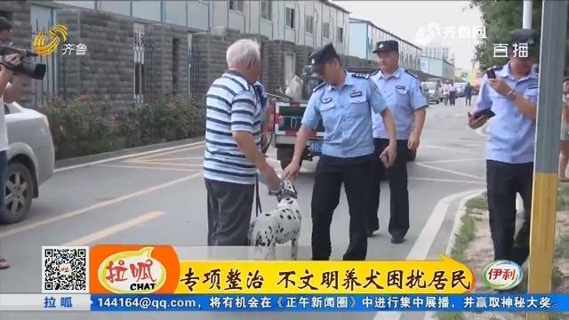 济南:专项整治 不文明养犬困扰居民