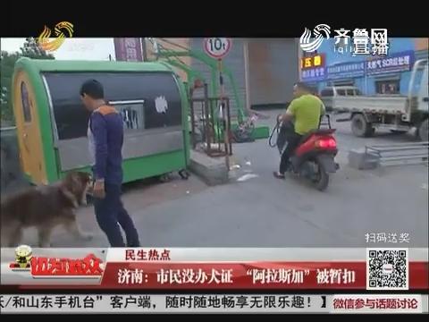 """【民生热点】济南:市民没办犬证 """"阿拉斯加""""被暂扣"""