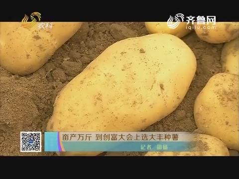 亩产万斤 到创富大会上选大丰种薯