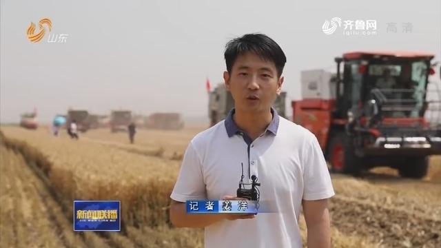 山东5700万亩小麦开机收获