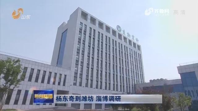 杨东奇到潍坊 淄博调研