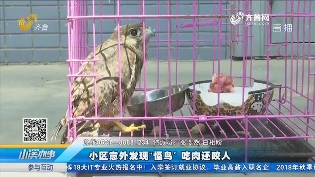 """济南:小区意外发现""""怪鸟""""吃肉还咬人"""
