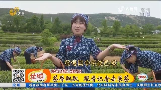 【齐鲁最美乡村】日照:茶香飘飘 跟着记者去采茶