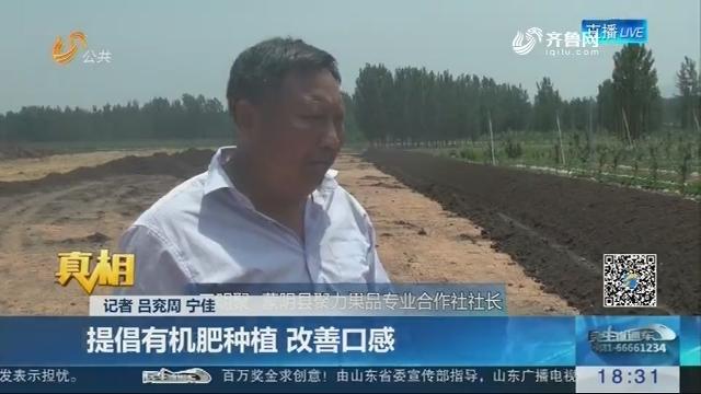 【真相】提质增效 蜜桃产业转型:提倡有机肥种植 改善口感