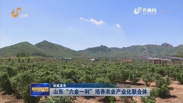 """【权威发布】山东""""六金一利""""培养农业产业化联合体"""