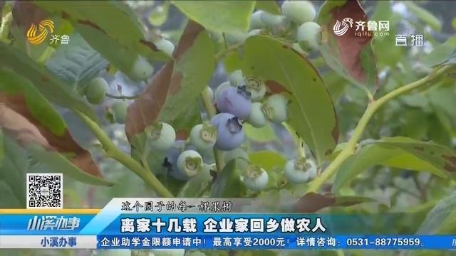 平阴:离家十几载 企业家回乡做农人