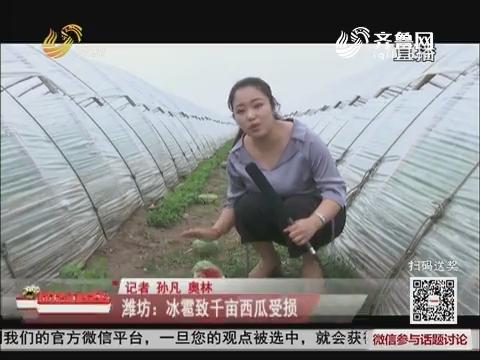 潍坊:冰雹致千亩西瓜受损
