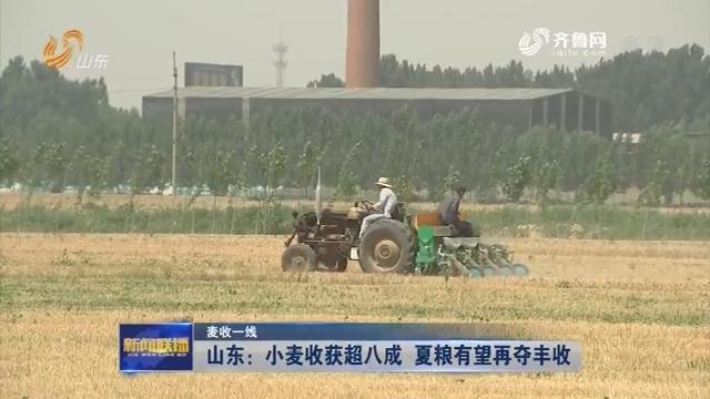 【麦收一线】山东:小麦收获超八成 夏粮有望再夺丰收
