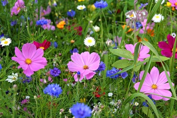 夏天里的花儿没有春天花朵的妩媚,没有春天里的百花争艳,没有春天里