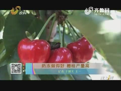 防冻做得好 樱桃产量高