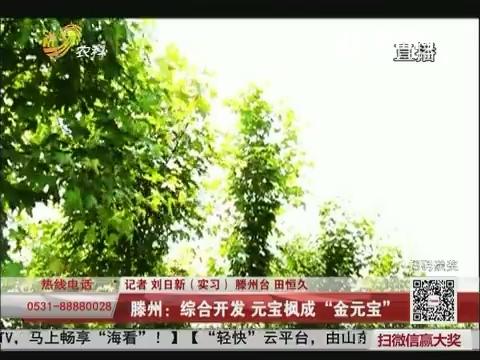 """滕州:综合开发 元宝枫成""""金元宝"""""""