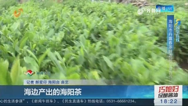 【闪电连线】海边产出的海阳茶